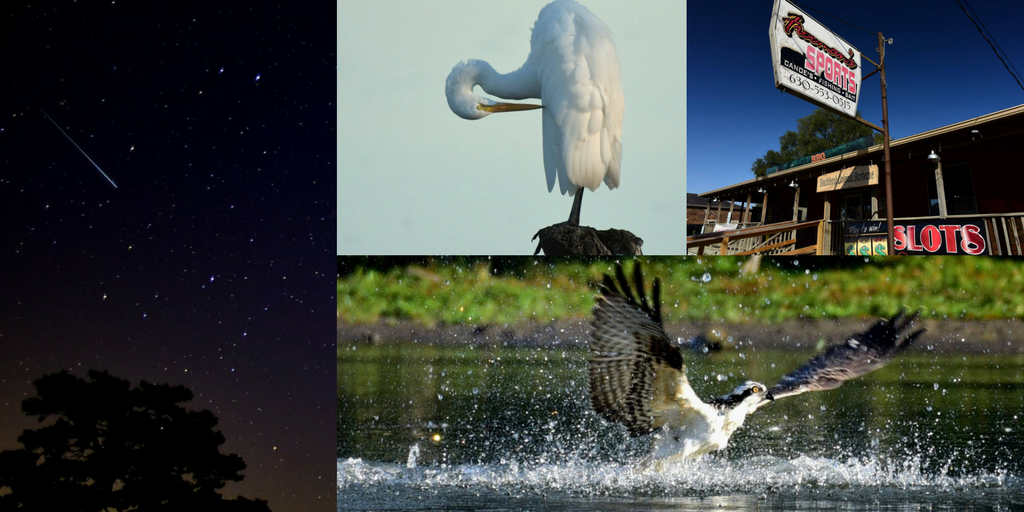 Collage of Bill Peterson's photos, clockwise from left: meteor across the night sky, great egret, freeman's sports in yorkville, osprey diving for fish in the fox river