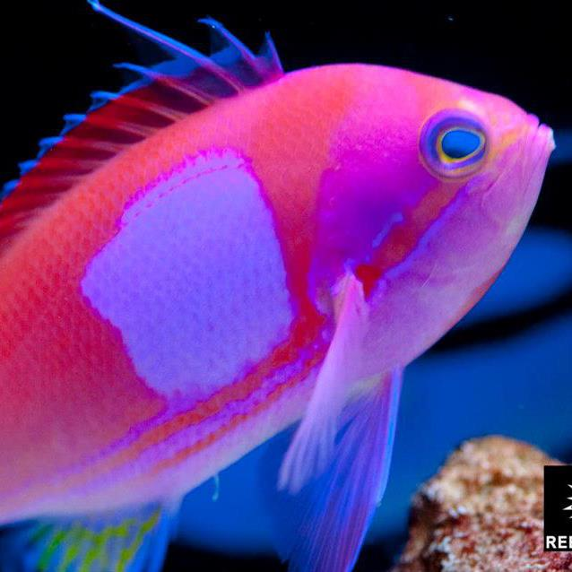 Reef Plus Saltwater Fish