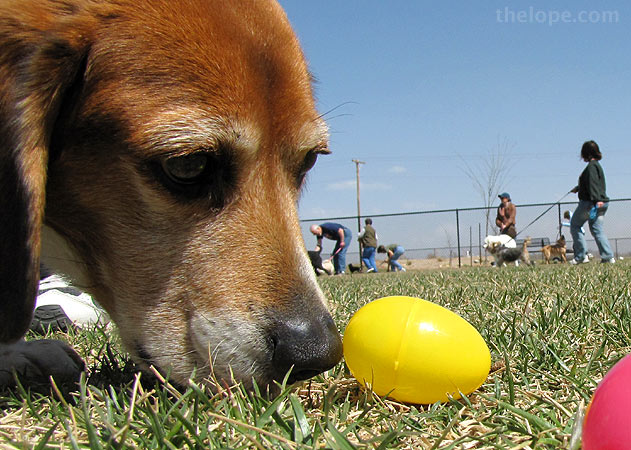 Doggie Easter Egg Hunt @ West Main