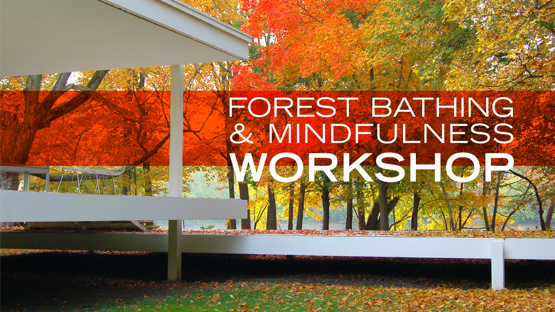 Forest Bathing & Mindfulness Workshop