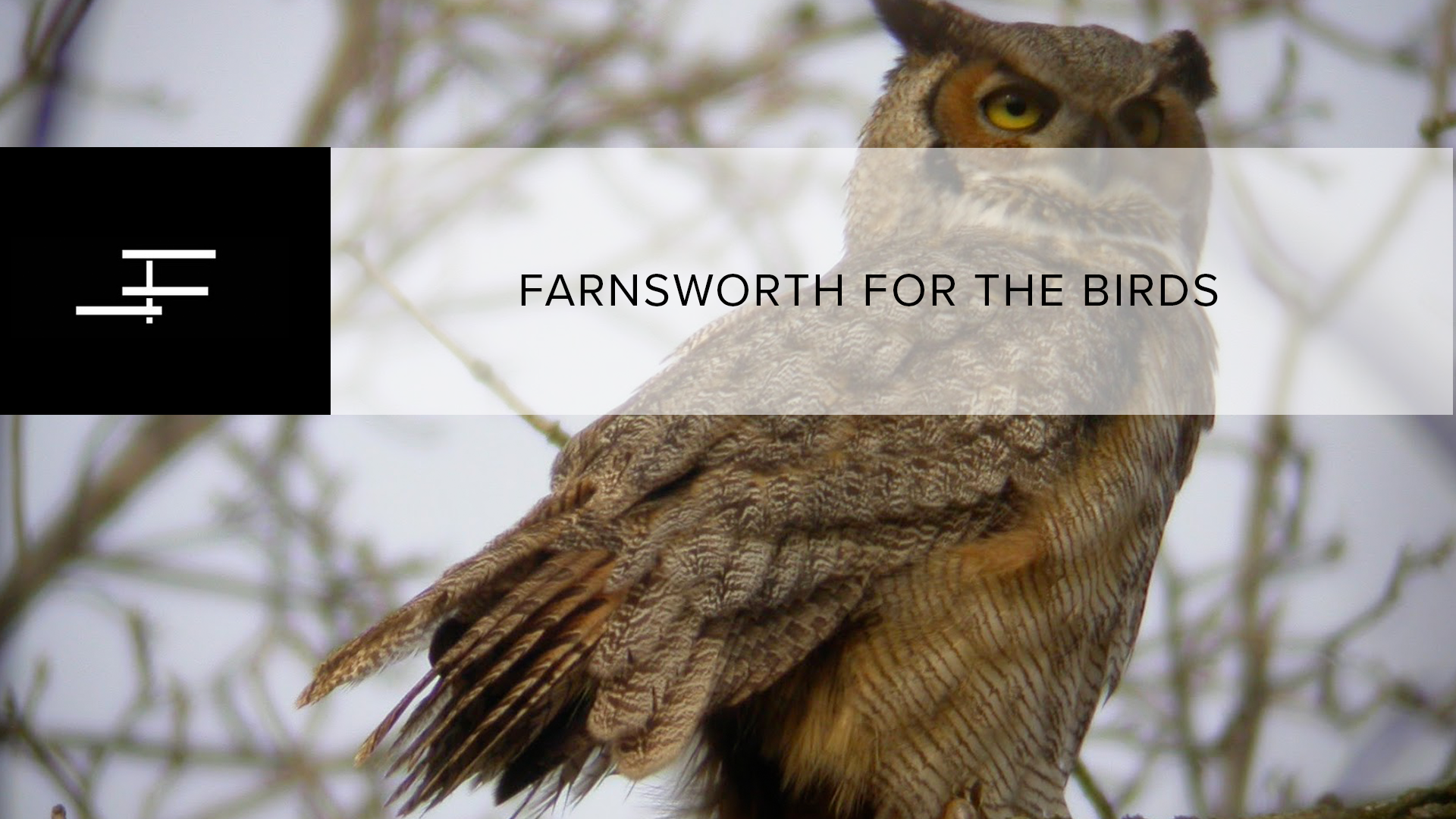 Farnworth For The Birds: Fall Migration